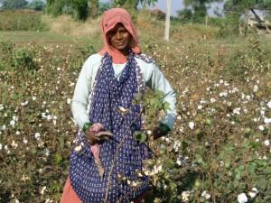 Coltivazione cotone in India