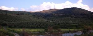 Una vista della tenuta dell'azienda Tabarani, in Sicilia