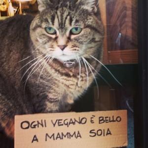 Gattino!